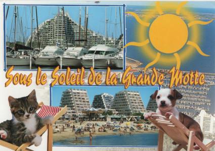tt-def-postkarte-motte 001