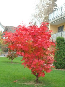 Herbst Engi