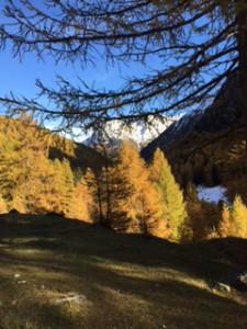 Herbst_M. Oberlin